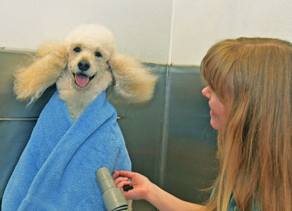 Dog Grooming In Rohnert Park Ca