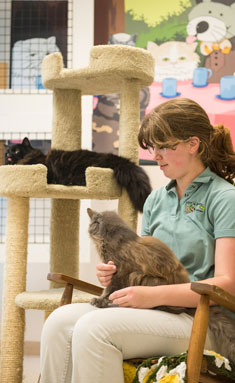 Staff petting a cat while another cat sleeps