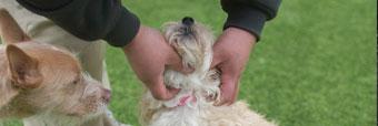Staff petting a dog