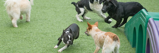 Group of dogs playing in the yard