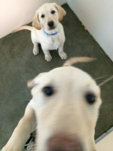 Daisy & Stella