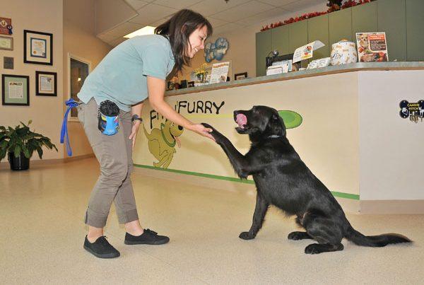 Dog training evaluation with staff