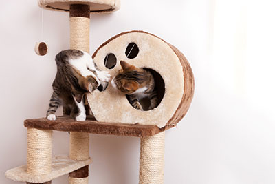 Two cats playing on a cat tree