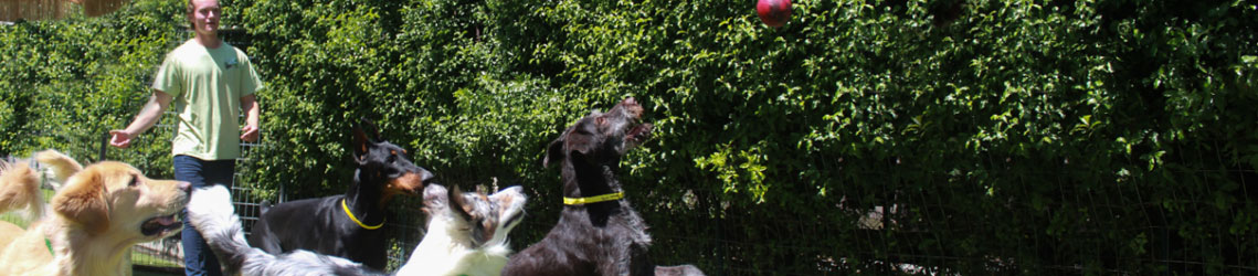 Dogs jumping for a red ball