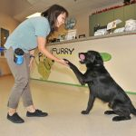 Dog training evaluation with staff
