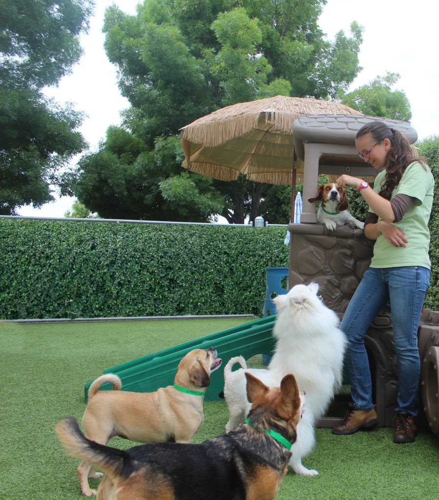 dogs playing with boarding staff