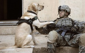 dog holding paw